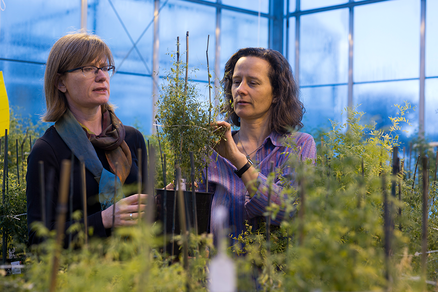 Agriculture researchers Kirstin Bett and Sabine Banniza.