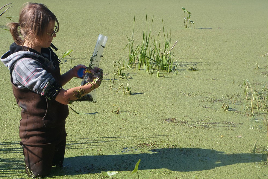 Raea Gooding collects a sediment sample from a reservoir covered in duckweed at the South Tobacco Creek Watershed in Manitoba (photo by Noel Galuschik).