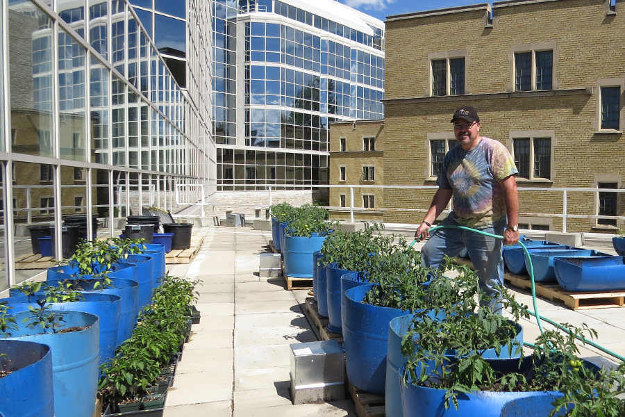 Grant Wood tends to his plants on the rooftop of the phytotron.