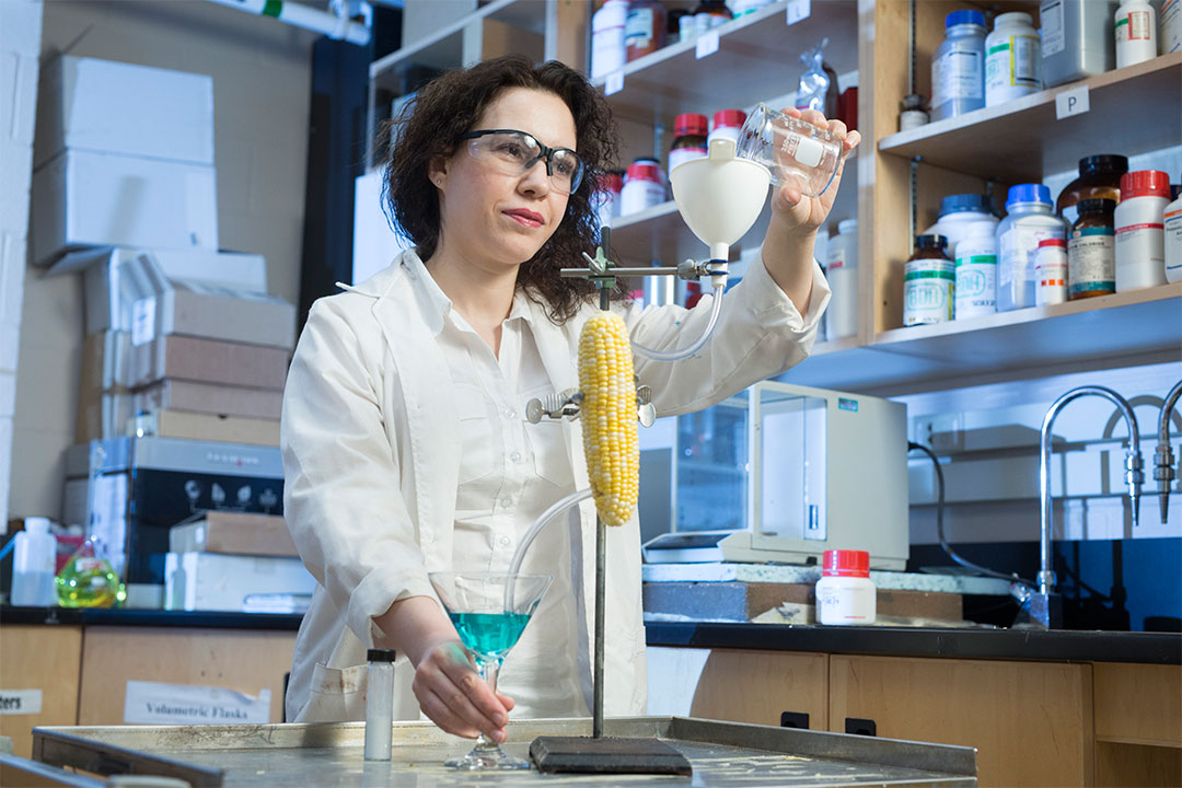 Leila Dehabadi puts corn at the centre of new, more efficient technology for separating water from ethanol (photo by David Stobbe).